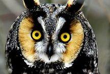 HUMMING BIRDS & OWLS / by Betty & Gary
