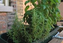 Growing my herbs :D  / by Niry Machin-Peralta