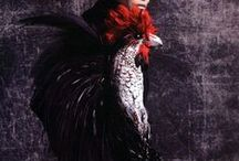 Not Your Average Chicken / by Gaylette