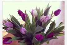 * my instagram * / My #instagram #photos #feng #shui #coaching #nature #flowers #spring #cats  #vegan #food #drinks #books #lifestyle #style #oberursel #frankfurt #socialmedia www.instagram.com/dein_lebensraum / by Pamela Bechler