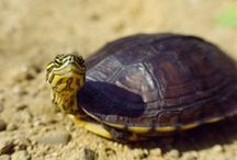 Turtles  / by Kari Linn