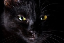 Our Friends The Felines / Do cats really love us?  Discuss. / by Tracyene Charles