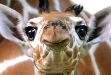 Awesome Animals / by Heather Gordon