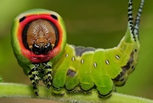 Cute and interesting BUGS / by Linda Dimmitt