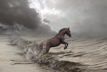 Horses / by Linda Dimmitt