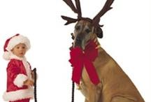holiday gifts & decor / by Elana Carlson