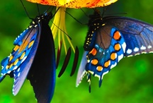 Dragonflies & Butterflies / Love of dragonflies & butterflies in nature and in art / by SMS Studios & Photography
