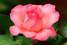 Beautiful flowers & gardens / by MaryAnne Hodges