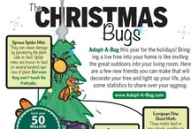 Holiday Infographics / by Christmas Tree Market