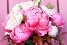 Gorgeous Bouquets / by LulaWed