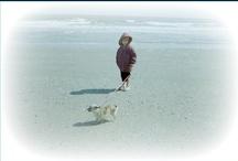 pets / by Krystle Walsh