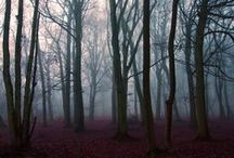 [Obsession: Trees.] / For the fascination of trees that I've had since I was a child... / by Jackie Nicole