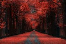 CELEBRATEit-FALL / The BEAUTY of all things FALL / by Trisha Margarone