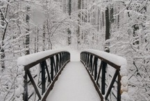 CELEBRATEit-WINTER / The Beauty of all things WINTER / by Trisha Margarone