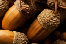 all things-ACORNS / For the LOVE of all things NUTTY / by Trisha Margarone
