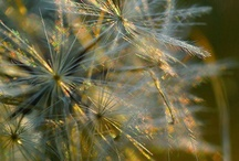 ADMIREit-NATURE / All things NATURE / by Trisha Margarone