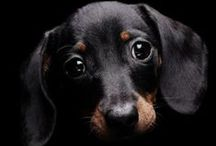 all things-DOXIE / for the LOVE of all things DOXIE / by Trisha Margarone