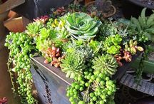 Containers and Container Gardens / by Anneliese Elrod