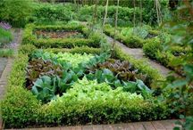 Potager: Kitchen and Cutting Gardens / by Anneliese Elrod