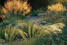 Grasses / by Anneliese Elrod