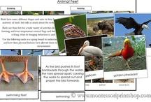 Montessori Science - Animals / Printable Montessori Science/Animal Materials  / by Montessori Print Shop