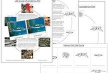 Montessori Nomenclature - Zoology / by Montessori Print Shop