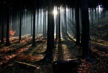 ☽ woodland magic ☾ / fairytale, nature, fey & fantasy / by Erica Svennblad