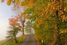 Fall Leaf Peepers / by Visit Gatlinburg