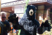 Zeno The Black Bear! / by Visit Gatlinburg