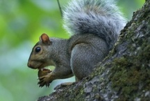 Smoky Mountain Critters / by Visit Gatlinburg