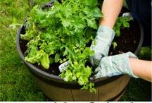 Gardening & Landscaping / Growing the goods organically. / by Living Surrendered