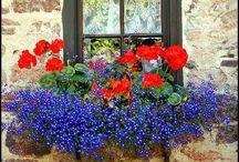 Flowers/Gardens / by Susie Q.
