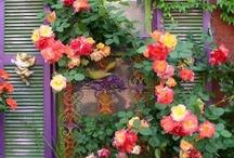 flowers / by Kathryn Stephens