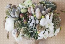 cool wedding stuff / by Amy Thorpe