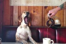 a dog is a woman's best friend / by Grace Voelker