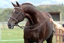 horses / by Anna Kate Johnson