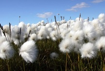 "Organic Cotton / Cotton is often referred to as ""the fabric of our lives,"" and for good reason. We come in contact with items made from cotton every day. So why not use organic cotton, grown without the use of toxic pesticides or fertilizers / by Teens Turning Green"