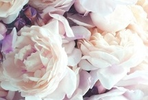 Flowers / by Laura Spiers