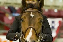 horses <3 / by Gabrielle Fleenor