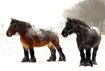 Draft Horses / I like big butts and I cannot lie.... / by Mary Kathryn Hodge