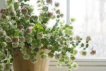 Gardening / by Wendi High