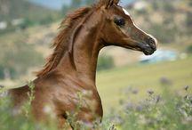 caballos / by Carlos Aime