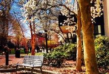 Campus through the Seasons / A glimpse into seasons on our New England campus.  / by Northeastern Admissions