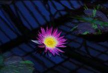 Flowers / by Claude Benard - HoteliTour