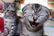 Laughs / by Allison Louise