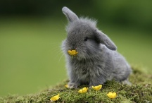 cute little animals / hamsters, guinea pigs, mouse/mice, chinchillas, puppies, kitties, etc. / by Marissa J