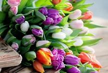 Floral / by Linda Flores
