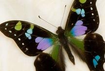 Butterflies / Moths / by Bea Rud