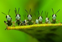 Insects / by Bea Rud