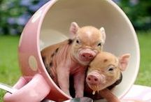 """Piglets  / """" Piglet: How do you spell LOVE?    Pooh: You don't spell it.You fell it.""""                                        / by Bea Rud"""